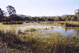 Round Swamp Victoria Valley